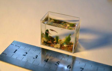 Самая маленькая рыбка в аквариуме