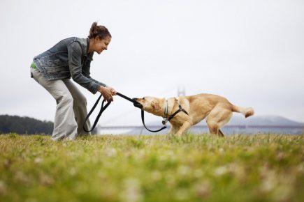 Игра с собакой на улице
