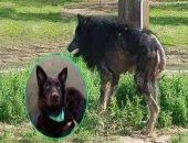 Пёс-оборотень оказался породистой собакой