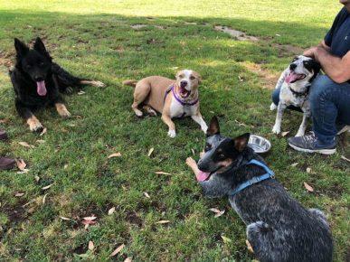 Семья Бисби с тремя собакам и Кингом