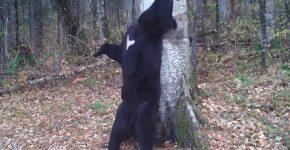 Пляски зверей возле деревьев в зоопарке Приморья