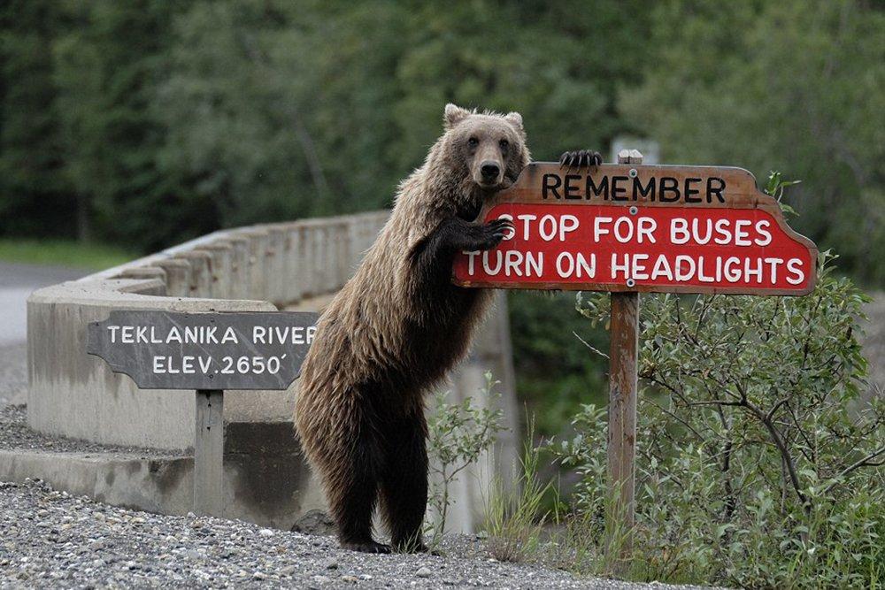 Медведь у указателя