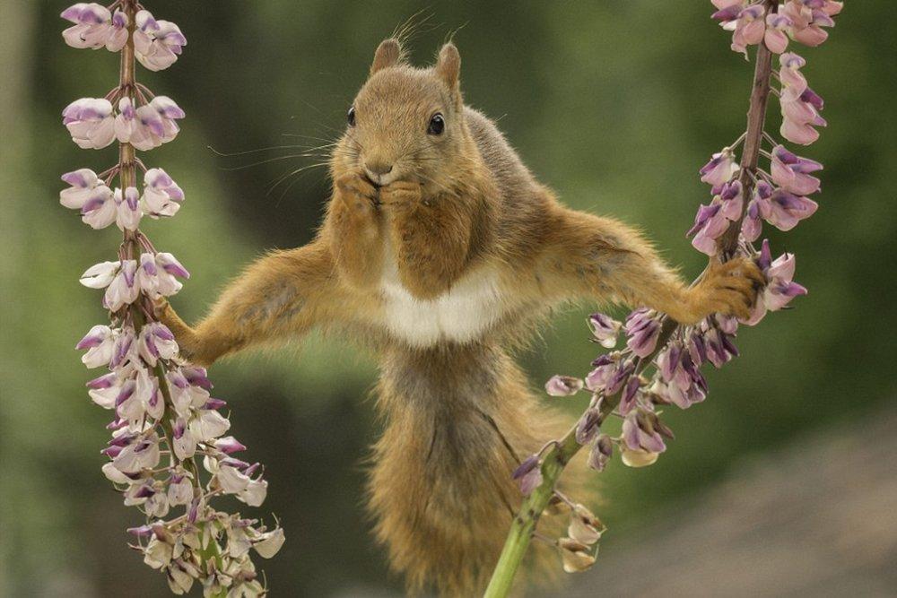 которых это весенние танцы животных картинки очень красивые