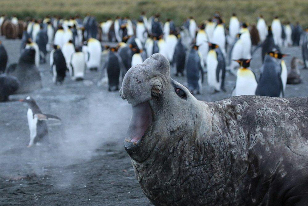 Пингвины и морской лев