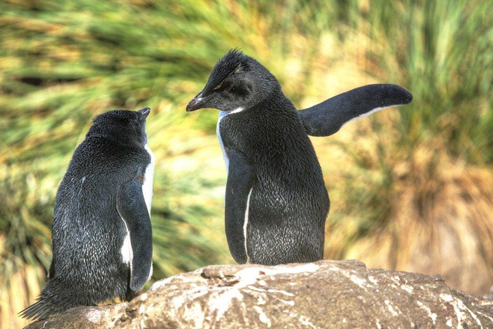 Беседа двух пингвинов