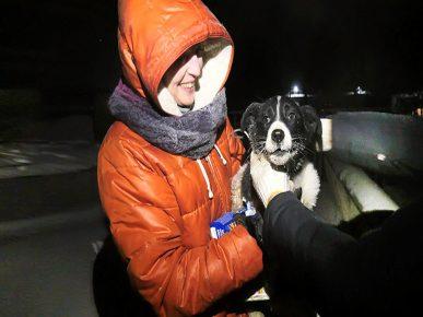 Спасение щенка из бетонной ловушки