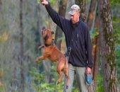Почему прогулки с собаками могут быть опасны для жизни