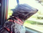 Собаку неделю искали после того, как её унесло ветром