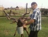 Верблюды, страусы, павлины и олени - все живут в посёлке недалеко от Грозного
