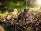 Медвежонок застрял в баке, но полицейский из Калифорнии спас бедолагу