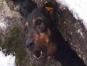 Застрявшую собаку под бетонной плитой спасли в Перми
