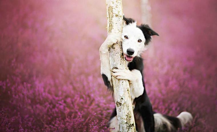 Собака обняла дерево Фотограф Алисия Змысловска