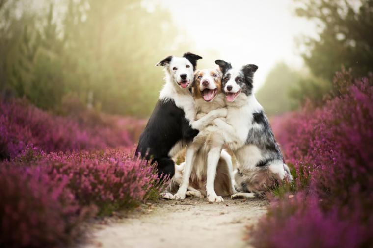Три собаки в цветах. Фотограф Алисия Змысловска