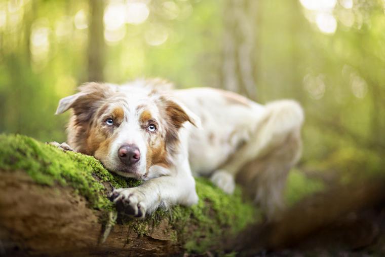 Собака отдыхает на старом дереве. Фотограф Алисия Змысловска