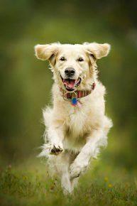 Собак в прыжке. Фотограф Алисия Змысловска