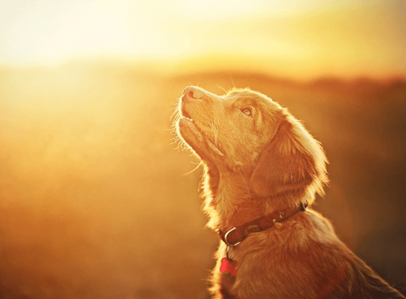 Собака сидит в лучах заходящего солнца. Фотограф Алисия Змысловска
