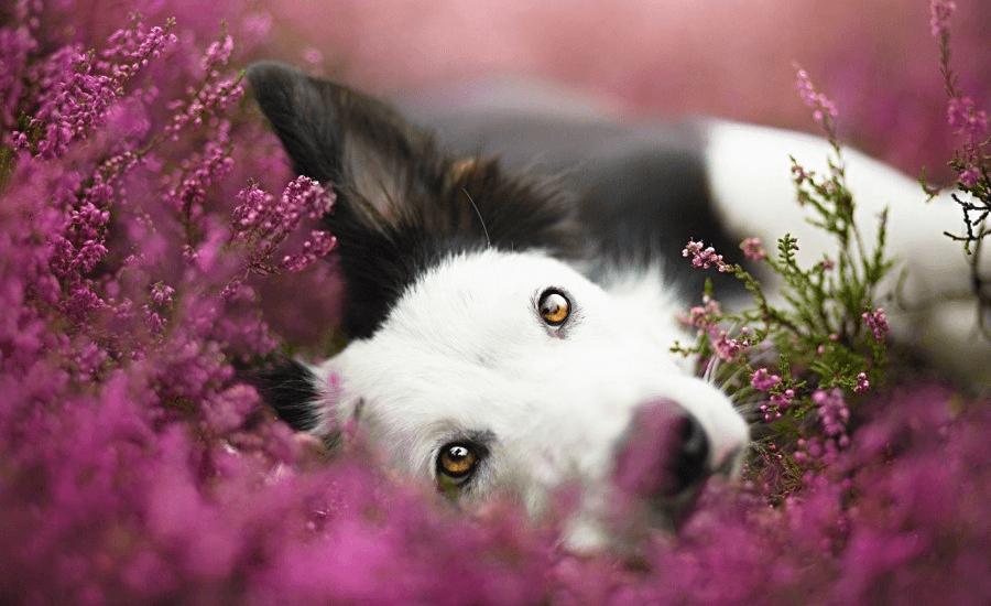 Фотограф Алисия Змысловска