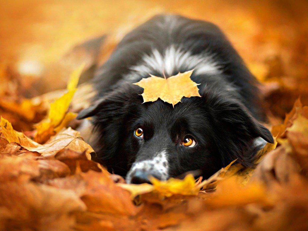 Щенок среди осенних листьев. Фотограф Алисия Змысловска