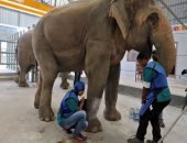 Первая в стране лечебница для самых крупных наземных млекопитающих