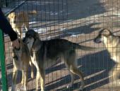 Дети из детдомов посетили приют для животных в Подольске