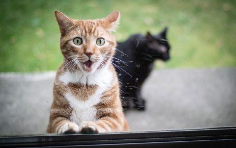 искреннее удивление кошки
