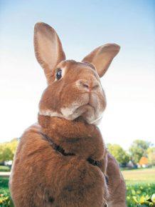 искреннее удивление кролика
