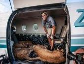 Южноафриканский зоозащитник перевёз троих львом из украинского цирка на родину в Африку