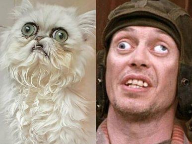 страшный кот и Стив Бушеми