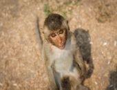 Жители Таиланда устроили пир для обезьян
