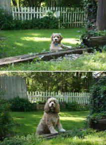 Собака до и после того, как выросла