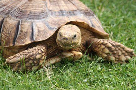 Черепаха на траве