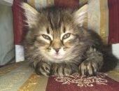 Теперь у хозяина кота-мема живёт новый питомец