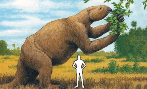 Предок ленивца