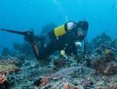 Видео: акула чуть не откусила голову аквалангисту