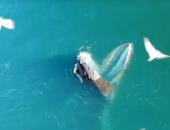Изобретательные киты придумали новый способ съедать как можно больше рыбы