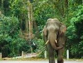 Выскочил из ниоткуда: водитель врезался в слона и погиб