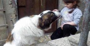 Женщина переехала в Грузию и основала скорую помощь для животных