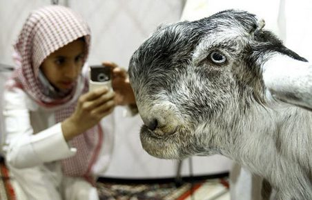 Дамасский козёл