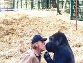 Умерла самая старая горилла из Британии