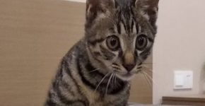Котёнок из Китая ищет хозяев из России