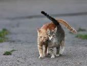 Жительница Душанбе находит, лечит и пристраивает бездомных котов