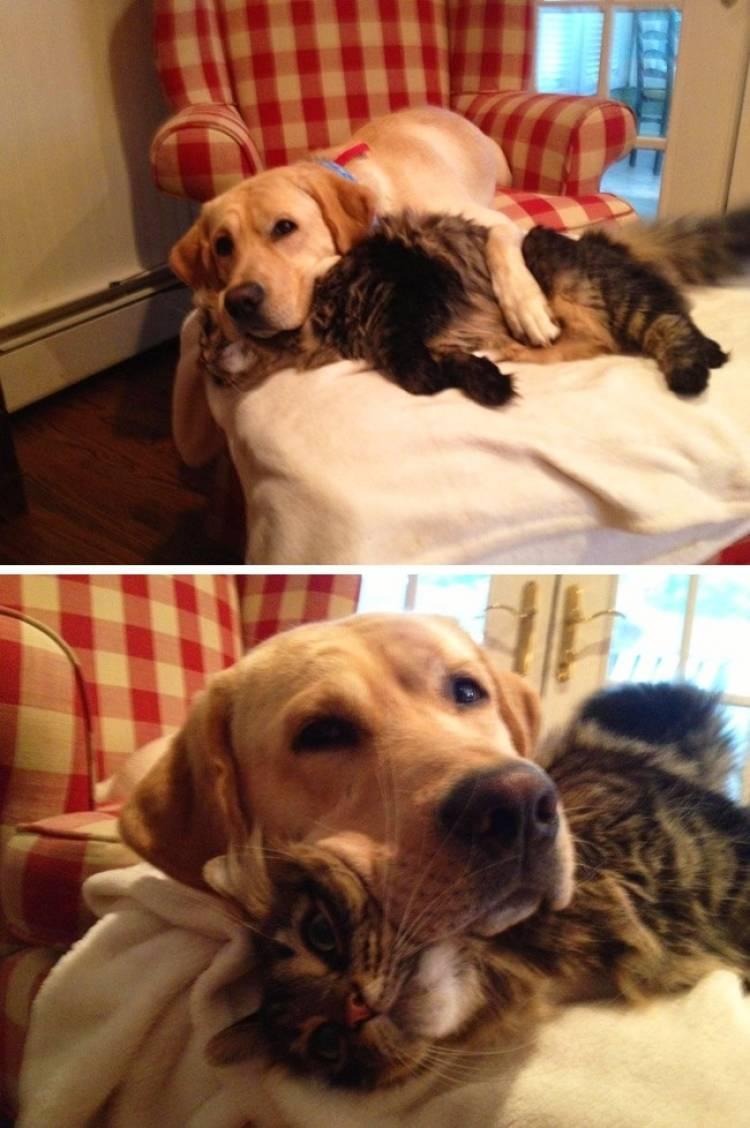 Кошка с собакой на кровати