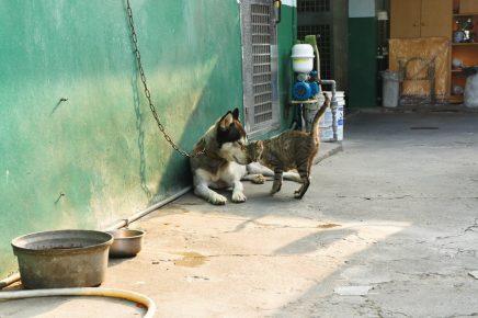 Кошка ласкается об собаку