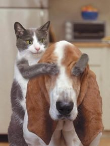 Кот закрыл лапами собаке глаза