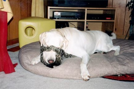 Кошка закрыла глаза собаке