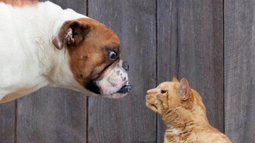 Кошка с собакой сорятся