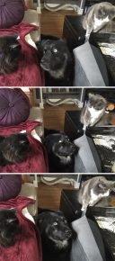 Коты и собака