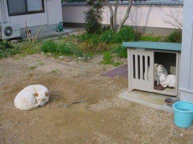 Кошки выселили собаку из будки