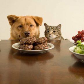 Кот с собакой мечтают о котлетах