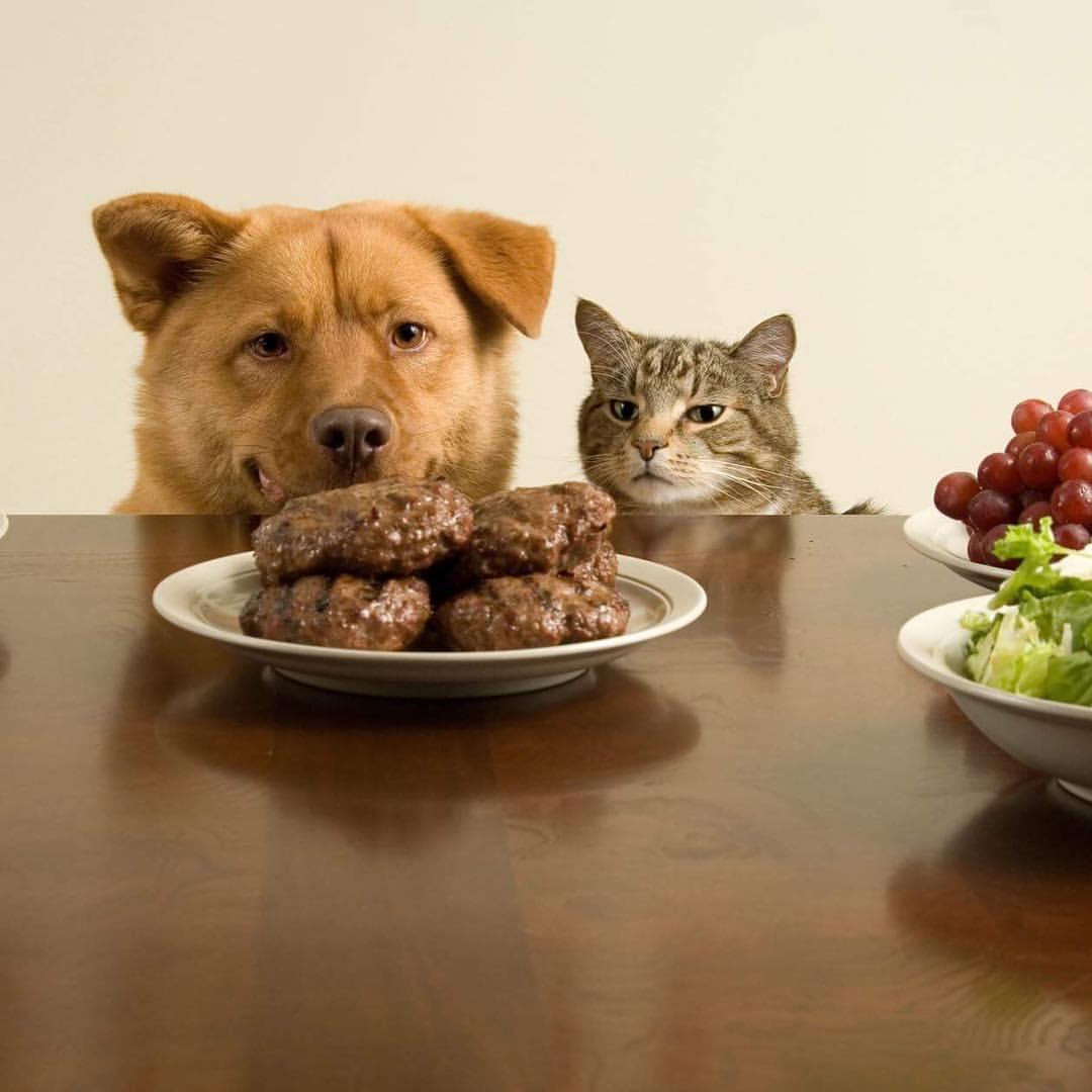 Прикольные картинки с кошкой и собакой, картинки надписями